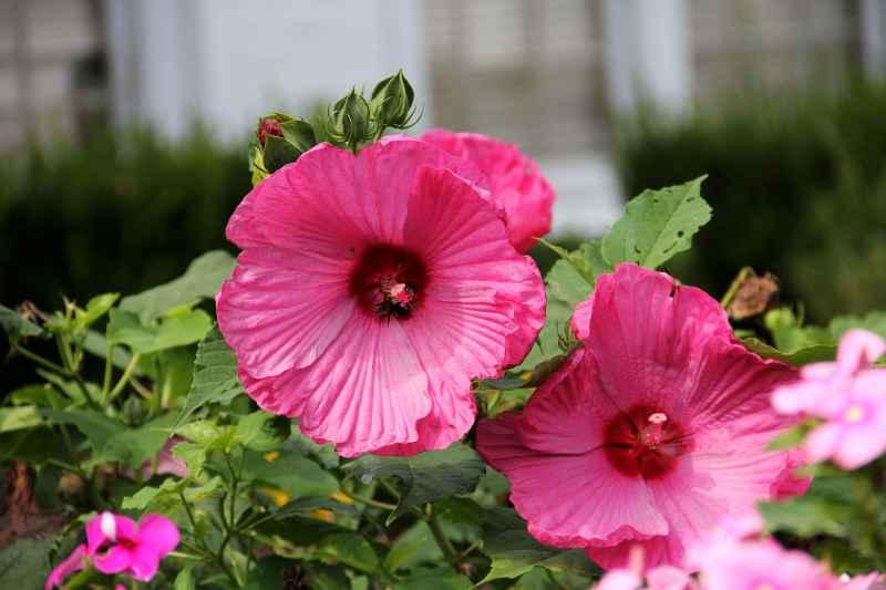 Ekologiczne kwiaty w ogrodzie