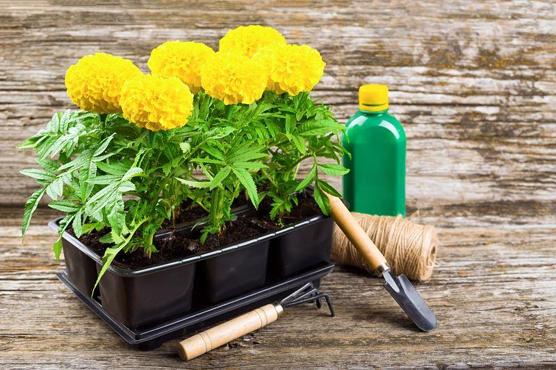 Biohumus – jeden z najbardziej cenionych nawozów – cena, dawkowanie, skład, ciekawostki 2