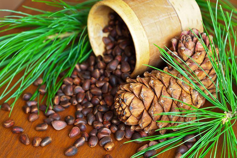 Cedr syberyjski - cena sadzonek, uprawa, pielęgnacja, porady 2