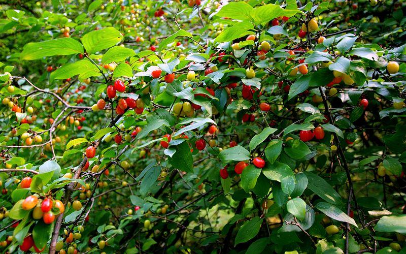 Drzewa owocowe do ogrodu - przegląd najpopularniejszych odmian 2