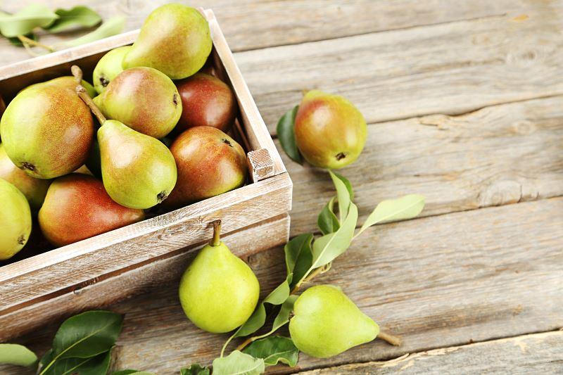 Grusza Faworytka - odmiany, sadzenie, uprawa, choroby 2