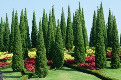Ciekawy ogród z wysokimi, strzelistymi roślinami - source: FreeDigitalPhotos.net by foto76