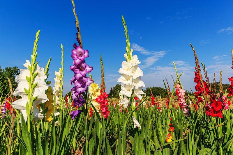 Byliny ogrodowe wieloletnie - przegląd najpopularniejszych roślin 3