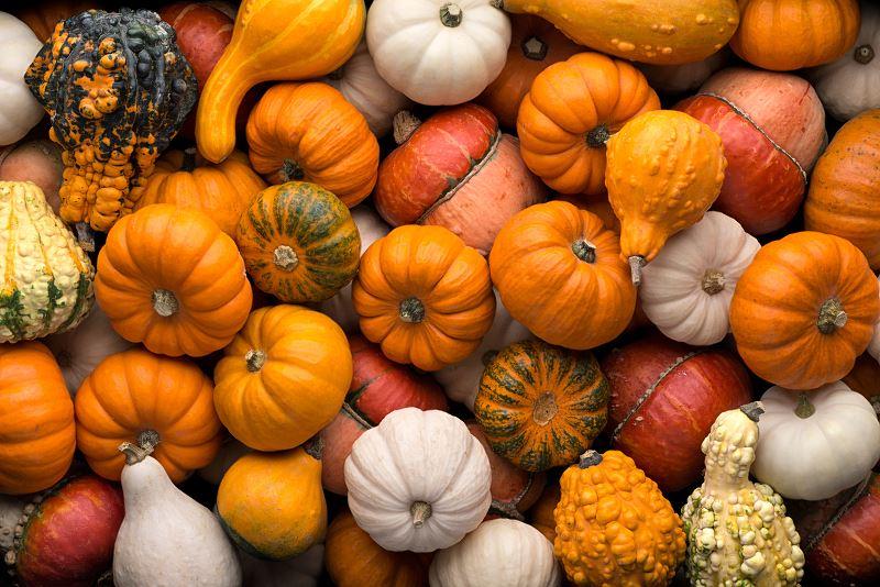 Dynia w ogrodzie – odmiany, sadzenie, uprawa, pielęgnacja 2