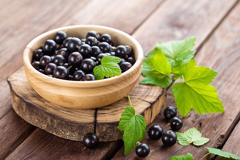 Czarna porzeczka - sadzenie, uprawa, pielęgnacja, właściwości lecznicze, witaminy 2