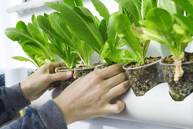 Perlit ogrodniczy - zastosowanie, cena, proporcje i inne porady 2