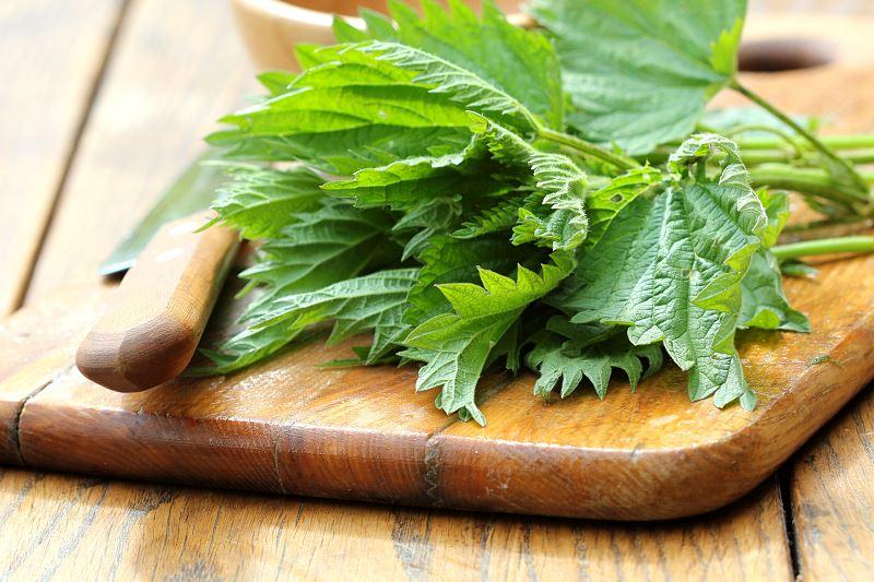 Pokrzywa – właściwości, zastosowanie lecznicze, sok z pokrzywy i wiele więcej 2