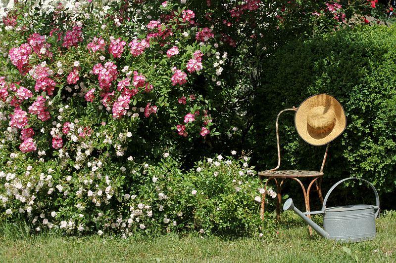 Róże okrywowe w ogrodzie - sadzenie, pielęgnacja, uprawa 2