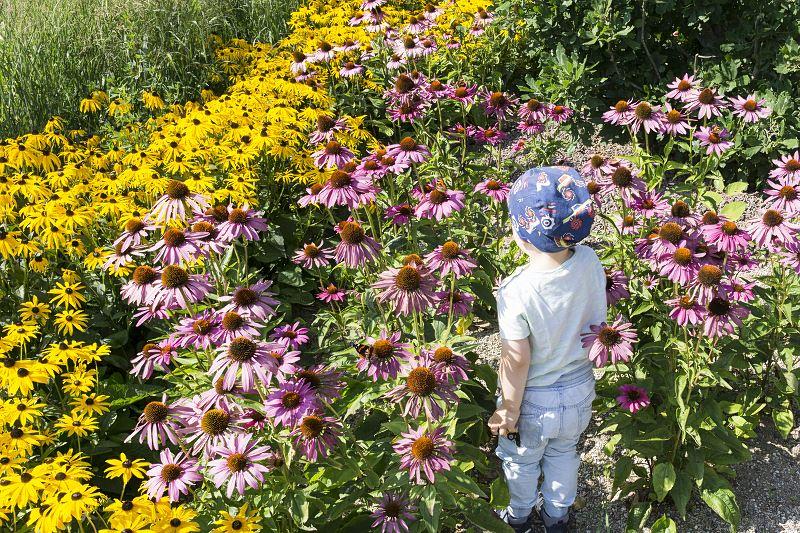 Rudbekia - co warto wiedzieć, jak sadzić i uprawiać 2