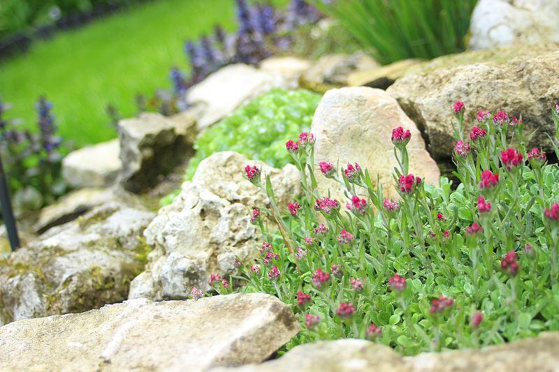 Wymarzone projekty skalniaków ogrodowych - najlepsze pomysły 2