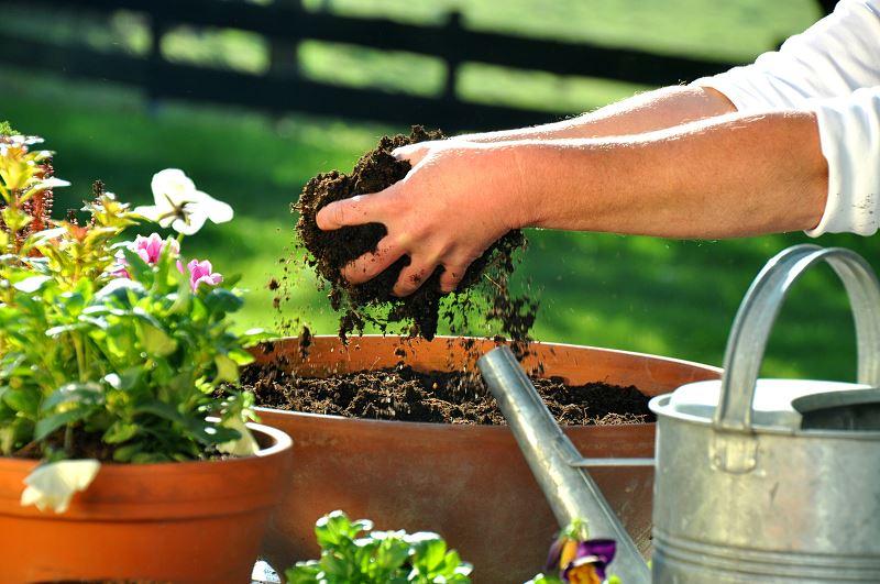 Torf do ogrodu - rodzaje, zastosowanie, skład, porady 2