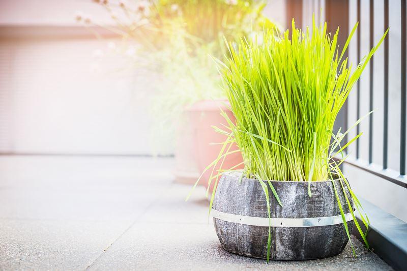 Trawy ozdobne na balkon - co warto wybrać? 2