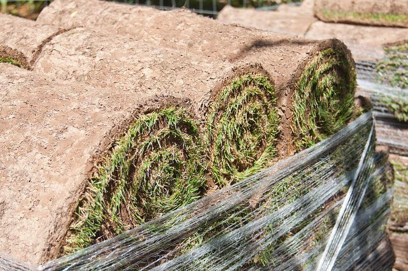 Trawa z rolki - ceny i porady dla chcących szybko założyć trawnik 2