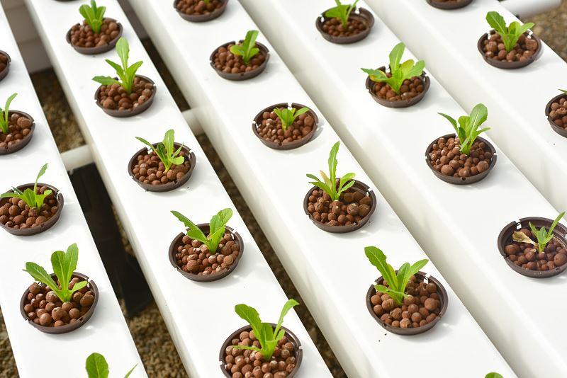 Hydroponika - nowatorski i kontrowersyjny sposób uprawy roślin doniczkowych 2