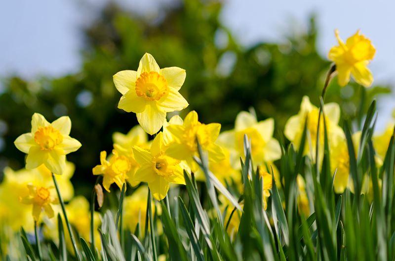 Najpiękniejsze rośliny wiosenne w Twoim ogrodzie – przegląd 2