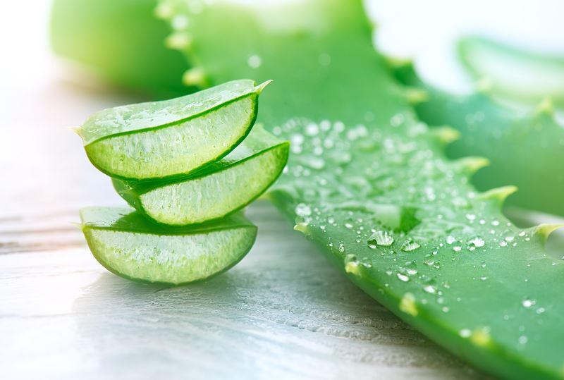 Właściwości aloesu - lecznicze, odżywcze i inne zastosowania aloesu 2