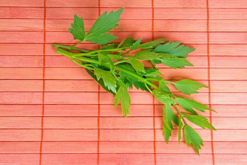 Lubczyk ogrodowy - uprawa lubczyka w doniczce i jego właściwości lecznicze 2