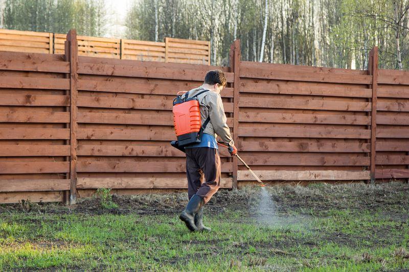 Zwalczanie mchu w trawniku i na kostce brukowej - sprawdzone sposoby 3