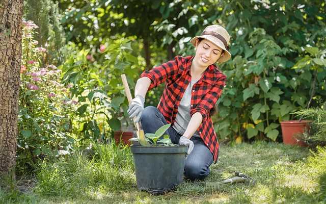 Koszt urządzenia i aranżacji ogrodu na działce o powierzchni 8 arów