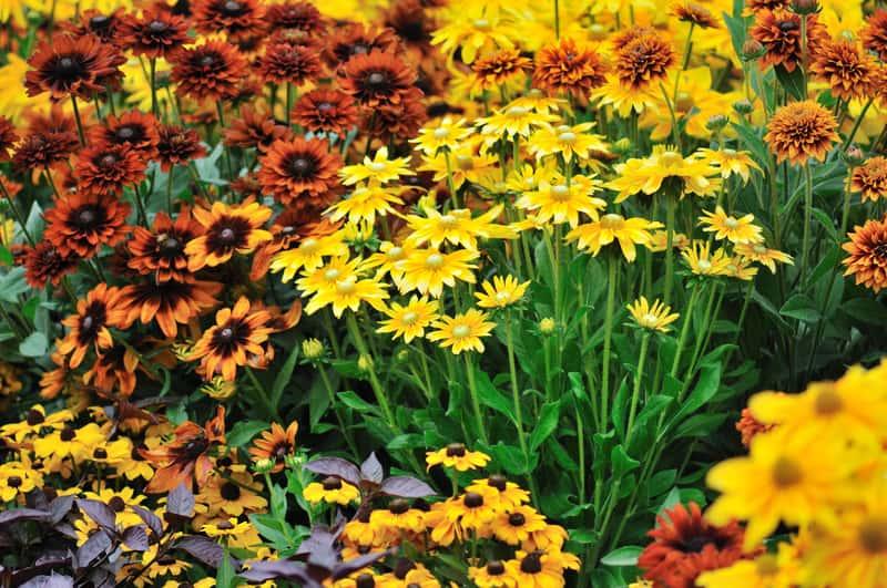 Byliny kwitnące jesienią w ogrodzie