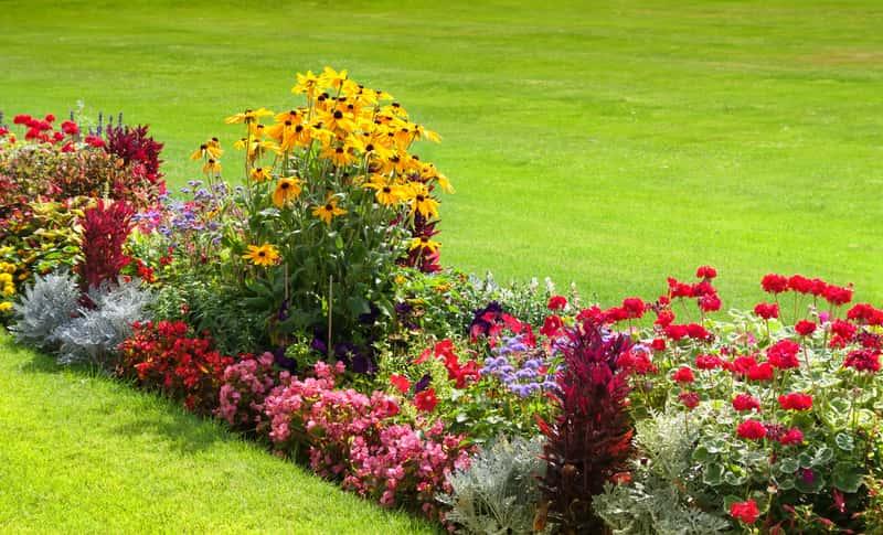 Pieknie kwitnące byliny latem