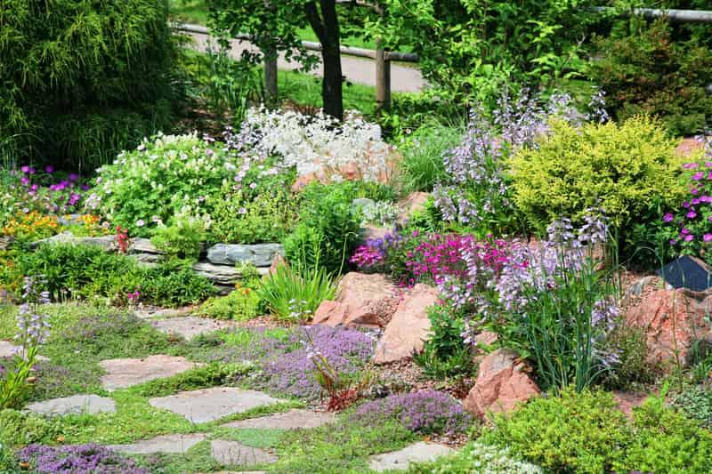Piękny skalniak ogrodowy