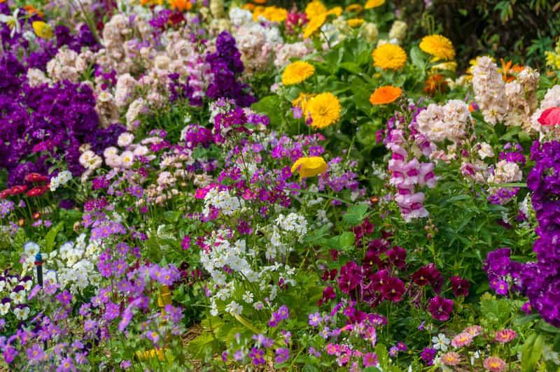 Byliny kwitnące wiosną w ogrodzie
