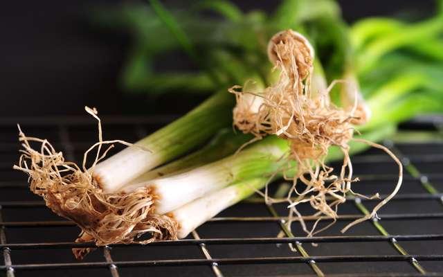 Cebula dymka - uprawa cebuli w każdym domu - poradnik