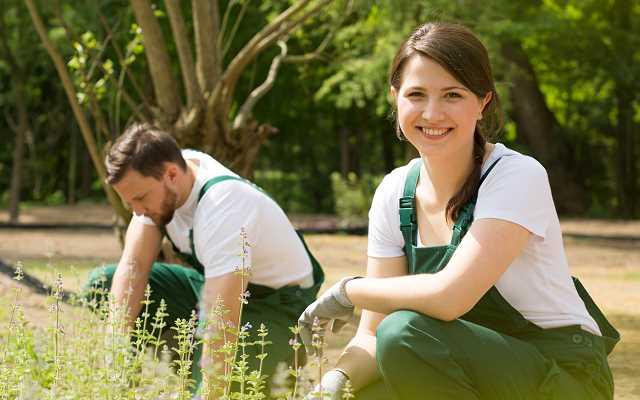 Cennik najpopularniejszych usług ogrodniczych 2018