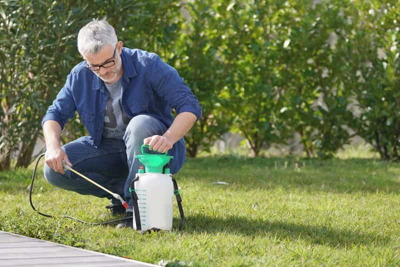 Chwasty na trawniku - najskuteczniejsze metody usuwania, opryski, porady