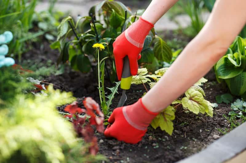 Prace w ogrodzie przy wycinaniu chwastów