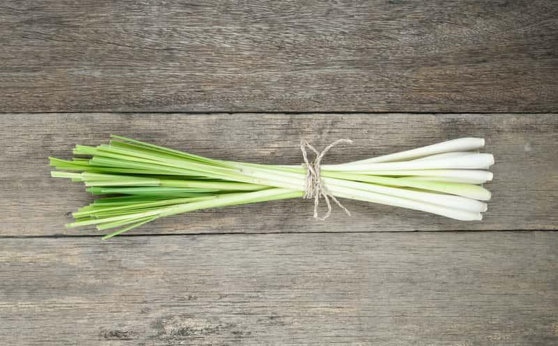 Trawa cytrynowa – uprawa, zastosowanie, właściwości