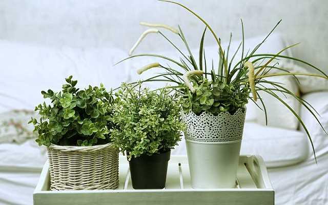 Jak wybrać doniczki do domu, by cieszyć się pięknym ogrodem cały rok?