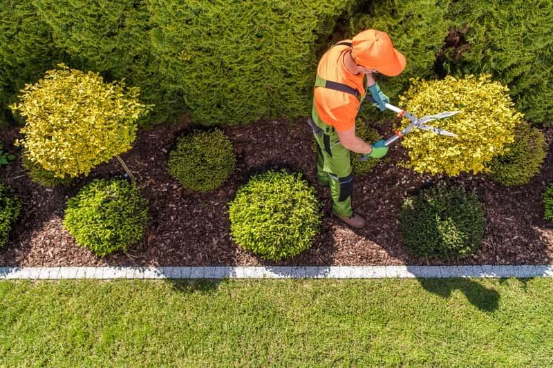 Formowanie drzew ozdobnych i owocowych krok po kroku - poradnik praktyczny