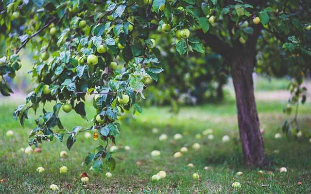 System nawadniania a rośliny sadownicze