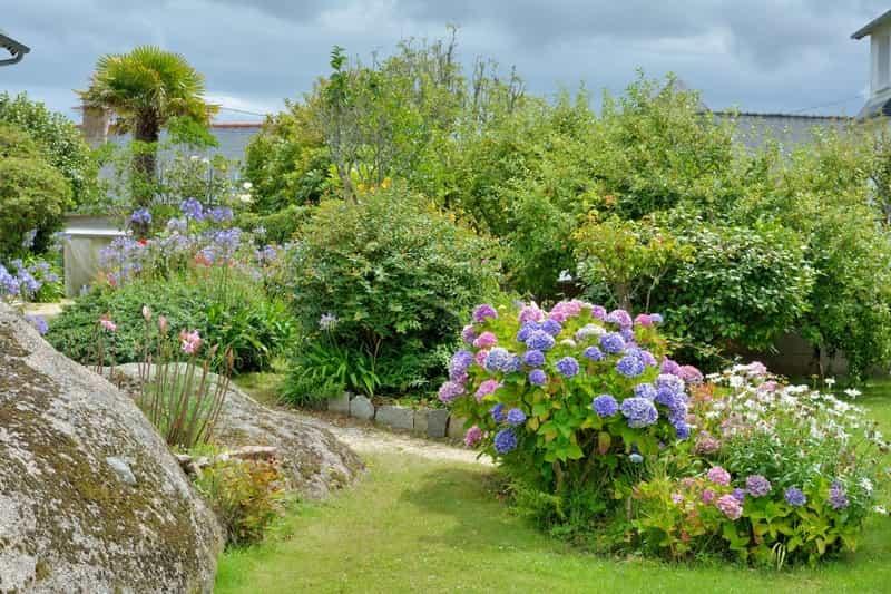 Hortensje w pieknym ogrodzie
