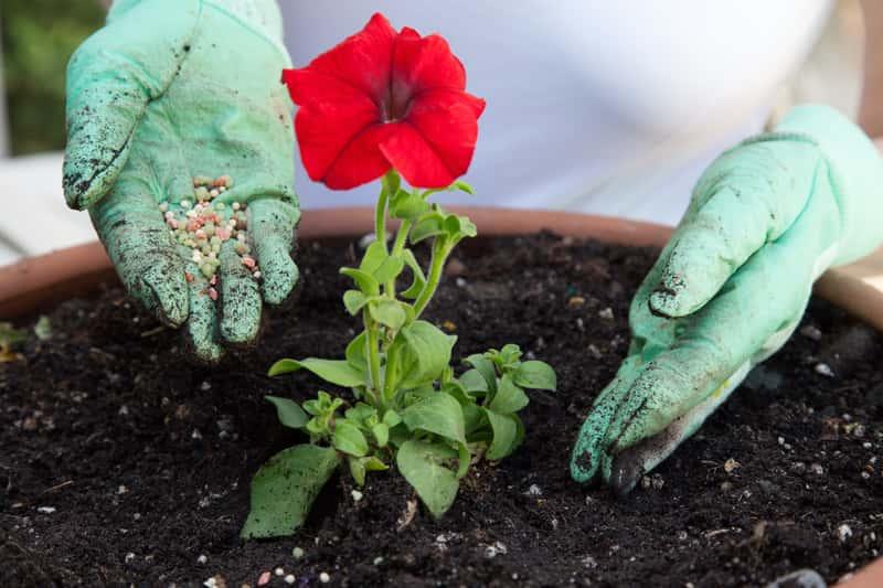 Hydrożel do roślin doniczkowych - rodzaje, cena, zastosowanie, działanie