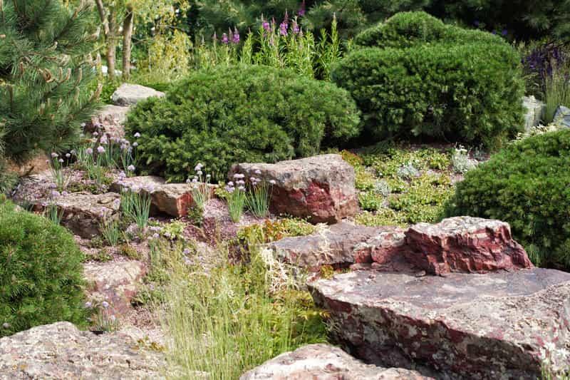 Skalniak ogrodowy z iglakami