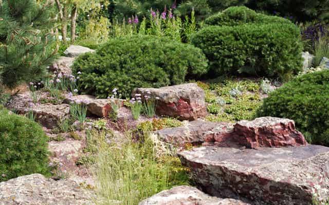 Które iglaki na skalniak nadadzą się najlepiej? Przegląd odpowiednich roślin