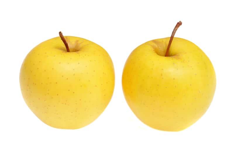 Dojrzałe jabłka jabłoni Kosztela