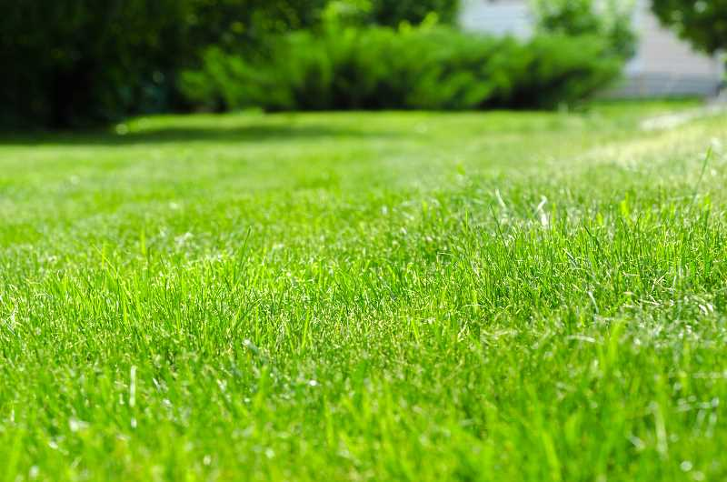 Jak i kiedy siać trawę, czyli zakładanie trawnika krok po kroku