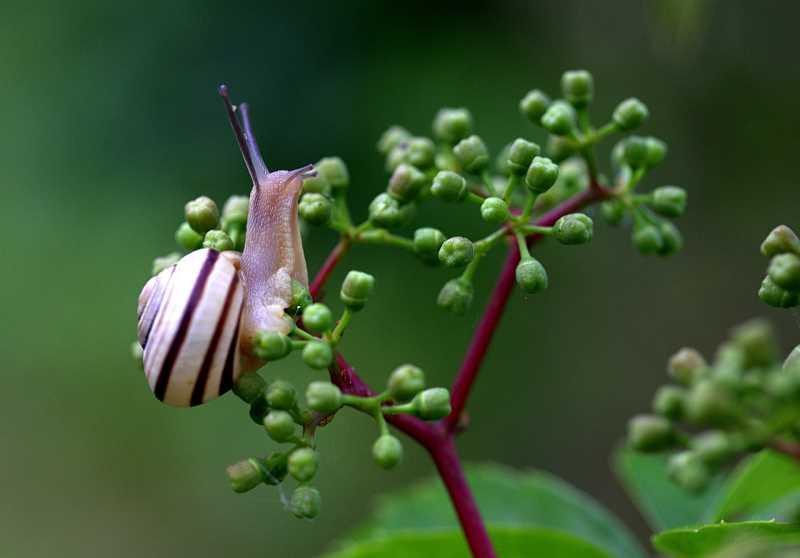 Jak się pozbyć ślimaków z ogrodu?