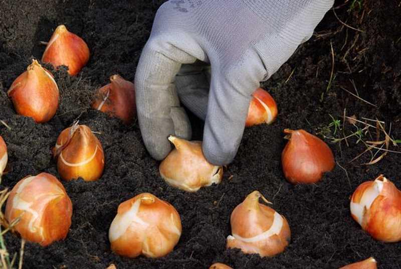 Jakie rośliny sadzić jesienią?