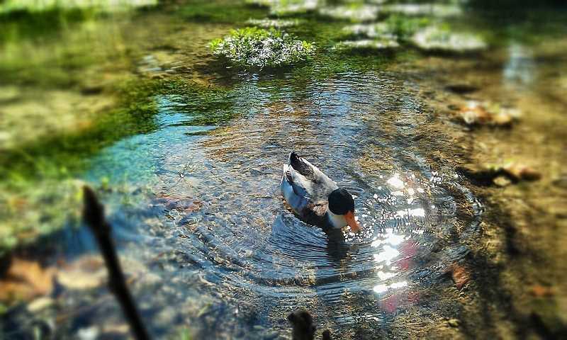 często dzikie zwierzęta korzystają z naszego oczka wodnego