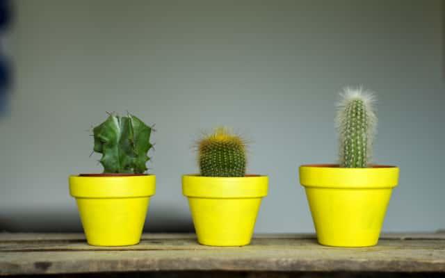 Jak przesadzać kaktusy? Praktyczny poradnik krok po kroku