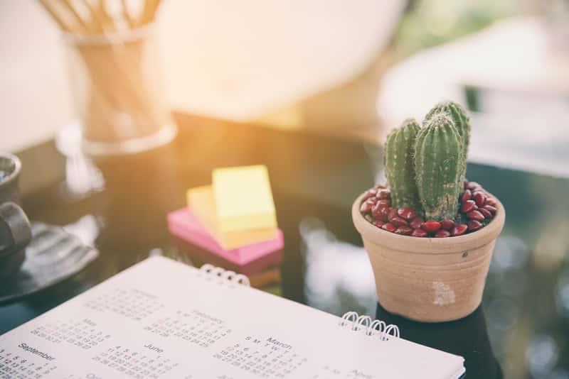Kalendarz na biurku z kaktusem