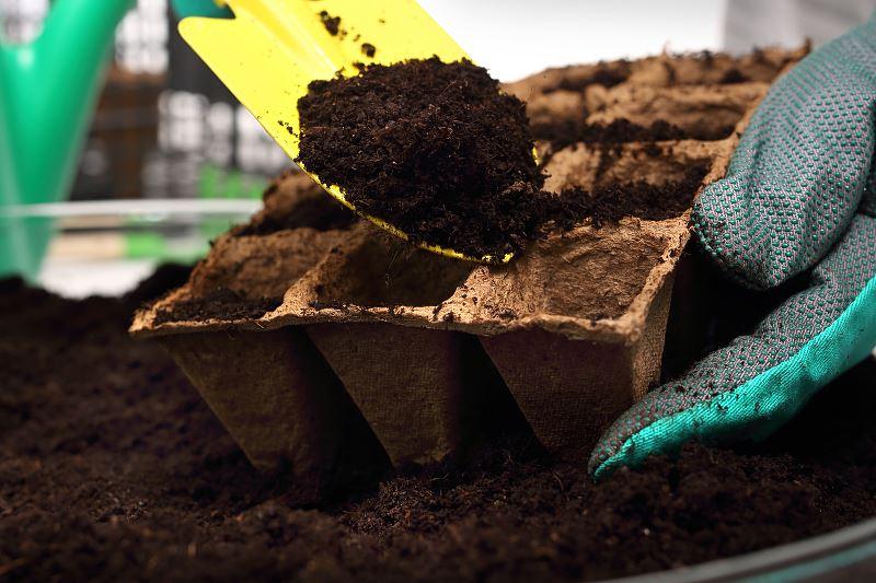 Terminy siewu w kalendarzu ogrodnika - sprawdź co i kiedy zasiać