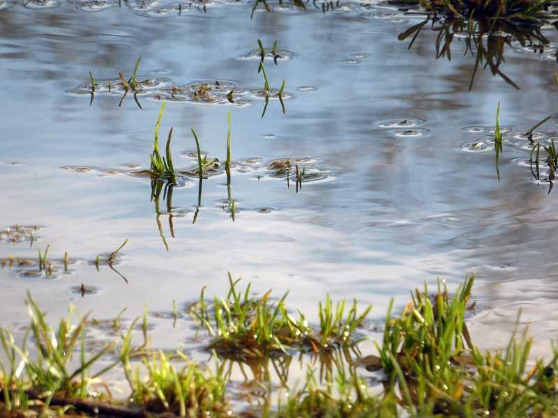 utrzymujące się po deszczu kałuże mogą wskazywać na potrzebę odwodnienia działki