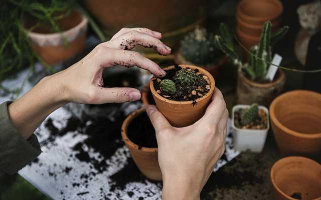 5 najlepszych poradników o ogrodnictwie dla laika
