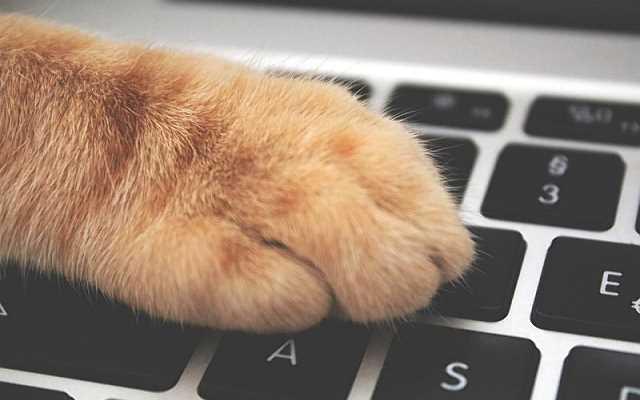 7 powodów, dla których warto kupować karmę i akcesoria dla zwierząt w internecie!